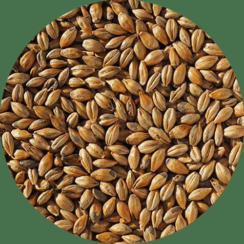 Malte Amber - Crisp