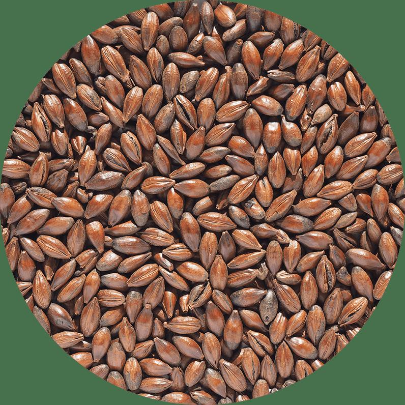 Malt-Single_Chocolate-Malt-796-x-796