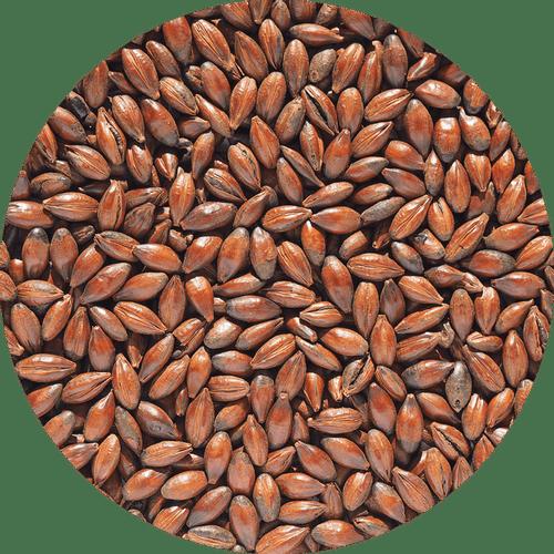 Malte Chocolate Claro - Crisp