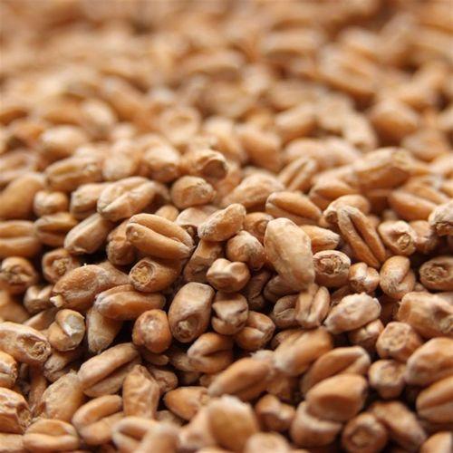 Malte de Trigo Agrária
